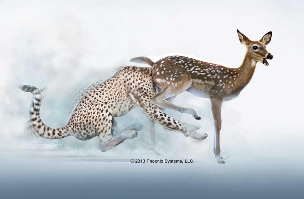 Deer_Cheetah_Slider